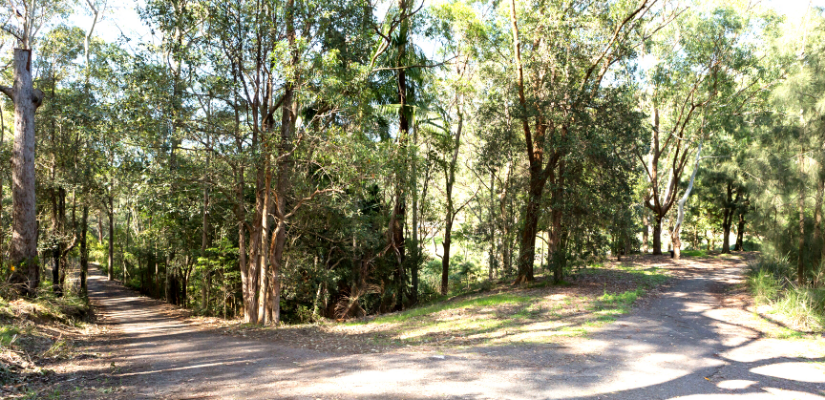 Walking trail in Blackbutt Reserve